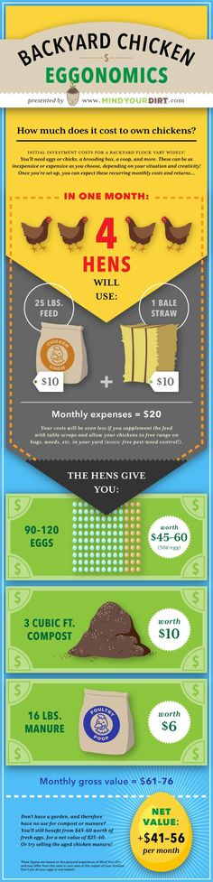 Mind Your Dirt Urban Backyard Chicken Costs Pinterest Infographic. The actual costs and profits of raising urban backyard chickens will surprise you! The price of chicken feed and bedding is nowhere near what you can get from the eggs, manure and compost material! Check it out! Also, enjoy this awesome pinterest infographic that my girlfriend made!