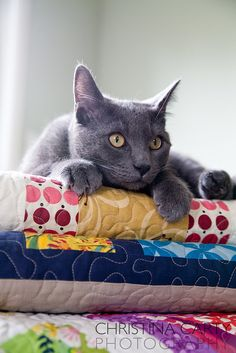 Cat on quilts