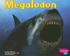 Megalodon - (Dinosaurs and Prehistoric Animals) by Janet Riehecky (Paperback) Shark Pictures, Shark Photos, Megalodon Shark, Extinct Animals, Types Of Animals, Prehistoric Creatures, Great White Shark, Shark Week, Animals