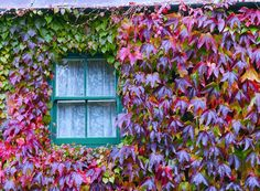 A tiny cottage window in Hillsborough, Co Down Cottage Windows, Windows And Doors, Gates, World, Life, Style, Swag, Gate, Peace