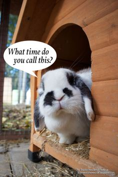 Rabbits are good for your health in so many ways. Our reasons explain exactly why bunnies are so fantastic and wonderful for you and your…