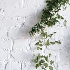 no rain, no flowers ❁ // Plant Aesthetic, Pot Plante, Plants Are Friends, No Rain, New Energy, Green Plants, Pretty Flowers, Shades Of Green, Bonsai