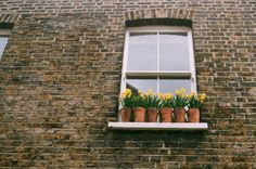 spring in london (by brianwferry) Flower Power, Hogwarts, Sweet Home, Tumblr, Exterior, Windows, Plants, Wonderful Things, Nice Things