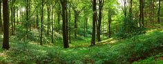 Panorama forest
