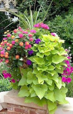 Beautiful Container Garden with spikes, pink geranium, lantana, violet and magenta petunias, and cascading sweet potato vine. Container Flowers, Flower Planters, Container Plants, Flower Pots, Flower Ideas, Succulent Containers, Fall Planters, Gemüseanbau In Kübeln, Small Yard Landscaping