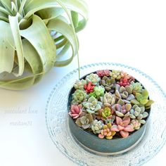 For today, I have some amazing succulents and cacti gardens that will take your breath away and leave you speechless. Succulents and cacti are perfect for Succulents In Containers, Cacti And Succulents, Planting Succulents, Cactus Plants, Planting Flowers, Mini Cactus Garden, Succulent Terrarium, Succulent Ideas, Succulent Arrangements