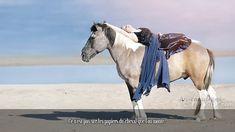Ce n'est pas sur les papiers du cheval que l'on monte.