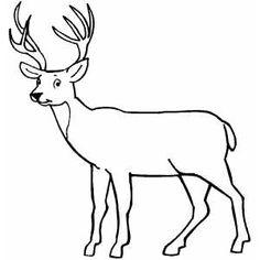 Deer Looking At You