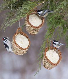 Preparing your garden for winter | garden ideas | winter gardens | bird feed baskets