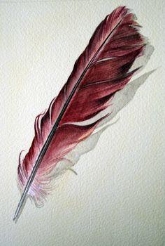 Cardinal Feather -