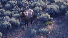 Wyoming hunting ranches for sale!