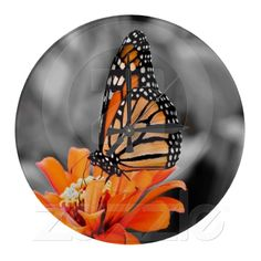 Madam Monarch Butterfly Wall Clock from Zazzle.com