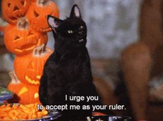 Hi, so we're already all aware that Salem Saberhagen (you know, the black cat) was the best part of Sabrina the Teenage Witch, correct? Neo Grunge, Grunge Style, Soft Grunge, Cat Memes, Funny Memes, Hilarious, Grunge Outfits, Salem Cat, Salem Saberhagen