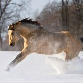 Best of the best - Equine Photography Katarzyna Okrzesik