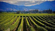 Vines and views ... the Marlborough wine region.