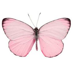 The pink butterfly effect...