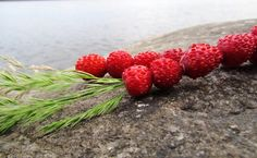 Wild strawberry Raspberry, Strawberry, Feeling Well, Wild Strawberries, Feel Better, Finland, Food And Drink, Fruit, Life