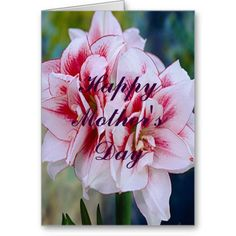 Pink Flowers Greeting Card http://www.zazzle.com/pink_flowers_greeting_card-137347466156096786?rf=238271513374472230  #mothersday