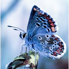 Butterfly Photos, Butterfly Wings, Evolutionary Biology, Beautiful Butterflies, Moth, Ladybugs, Kisses, Diana, Indoor
