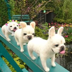 Cute Needle felted wool animal dogs(Via @momohappy77)