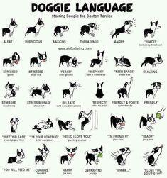 Doggy language.
