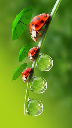 Ladybug Family Wallpaper by Sarchotic - 85 - Free on ZEDGE™ Tier Wallpaper, Animal Wallpaper, Colorful Wallpaper, Flower Wallpaper, Iphone Wallpaper, Beautiful Nature Wallpaper, Beautiful Bugs, Amazing Nature, Beautiful Flowers