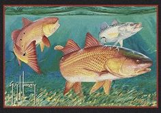 Milliken Guy Harvey Redfish Rugs | Rugs Direct