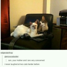 21 Times Tumblr Told The Truth About Cats. Please scroll through this. You will not regret it.