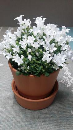 I miei fiori
