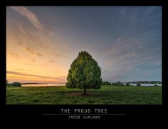 A beautiful tree close to my home in Roskilde. It looks so proud standing there in the sunset. https://plus.google.com/+JacobSurland/posts/Hj56tgD6wnZ