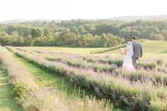 lavender fields couple portraits: Maryland Springfield Manor wedding by Katelyn James Photography