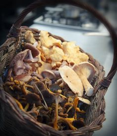 The New Forest wild foraged mushrooms