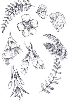 Hand drawn line art illustrations of New Zealand native plants and flowers by Zoe Sizemore of Case In Point Design Studio.