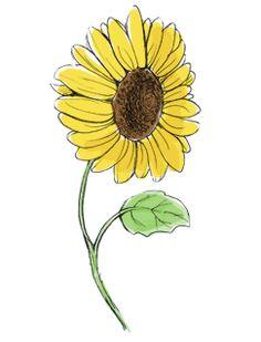 Free PreK through 2nd grade math lesson: How to Grow a Sunflower