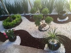 Front Garden Landscape, Small Front Yard Landscaping, Tropical Landscaping, Landscaping With Rocks, Outdoor Landscaping, Outdoor Gardens, Rock Garden Design, Backyard Garden Design, Garden Yard Ideas