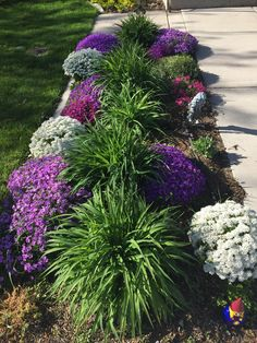 Front Yard Garden Design, Small Front Yard Landscaping, Outdoor Landscaping, Outdoor Plants, Lawn And Garden, Outdoor Gardens, Landscaping Ideas, Garden Tips, Small Front Yards