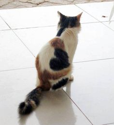 Do you ever wonder if cats get fur-envy, kind of like humans sometimes envy the looks of exotic supermodels? Though it's not likely that any self-respecting feline would ever admit to viewing themselves as anything less than a divinely perfect being, you can freely admit to being blown away by these cats with cool markings. …