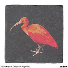 Scarlet Ibis Stone Beverage Coaster