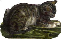 Oblaten Glanzbild scrap die cut chromo Katze cat kitten 13,7 cm