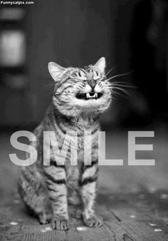 Happy Friday! Smile! #kitty #funny   ...........click here to find out more     http://googydog.com
