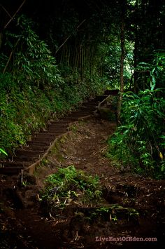 #Manoa Falls Trail. #Honolulu #Hawaii