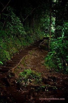 #Manoa Falls Trail. #Honolulu #Hawaii