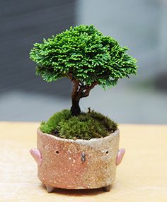 mini bonsai bonsai pinterest so cute search and. Black Bedroom Furniture Sets. Home Design Ideas