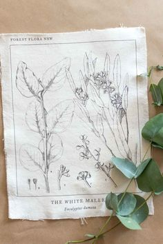 Free printable wall art - click to download yours! Featuring a vintage eucalyptus diagram taken from an old book, this botanical printable can be used to decorate your home, planner, binder covers, etc. #freeprintable #freeprintablewallart #wallart #freeprintables #flowers #nature #botanical Eucalyptus Species, Vintage Art, Vintage World Maps, Floral Embroidery Patterns, Botanical Wall Art, Binder Covers, Printable Wall Art, Flowers Nature, Free Printables