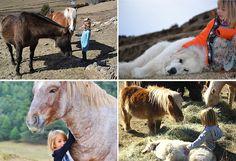 Fundación Projecte Miranda, una experiencia inolvidable entre caballos en libertad