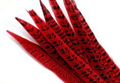 9-11 Inch Ringneck Pheasant Tail Feathers. (5) Red Bird Quills for Adding to Table Center Pieces. Long Stiff Decorations for Holiday Wreaths Pheasant Feathers, Peacock Feathers, Blue Feather, Blue Bird, Black Spot, Center Pieces, Holiday Wreaths, Table Centerpieces, Etsy Handmade