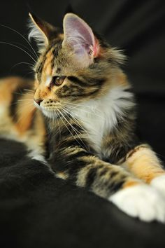 #cat #kitty beautiful and cute ♥♥♥