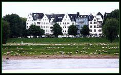 My photo of the Rhine river in Dusseldorf, German