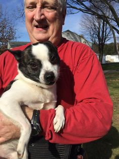 Meet Fred, a Petfinder adoptable Boston Terrier Dog | Evans City, PA | Hi my name is Fred (but sometimes my foster dad gets mixed up and calls me Jeff)!  Don't ask me...