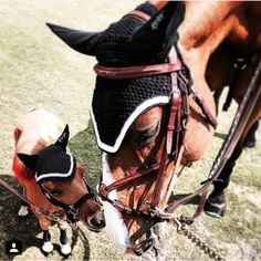 SPORT HORSE LIFESTYLE